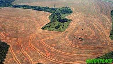 Deforestaci�n en el Amazonas